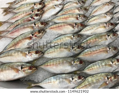 Fishes on the freez shelf in super market #1149621902