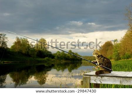 'fishing cat'