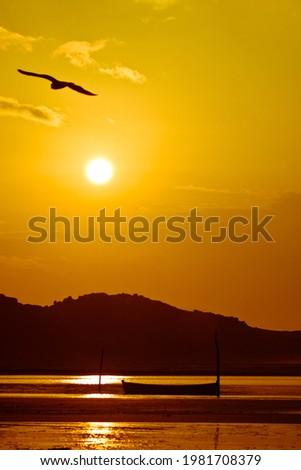 Flight of the seagull at dawn at Guarda do Embaú Beach - Brazil Foto stock ©