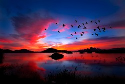 flock of birds flying on the background evening landscape above the lake in thailand.