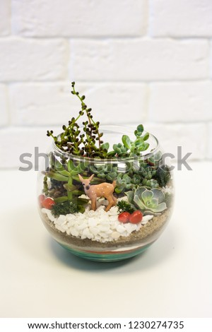 •Florarium - composition of succulents, stone, sand and glass, element of interior,  home decor