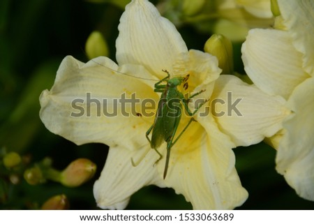 Flower and grasshopper. Summer. Natural background. Still life of flowers