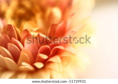 flower close-up. Shallow DOF
