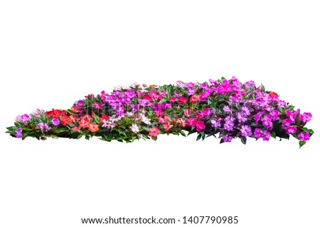 flower plant bush tree isolated with cliping path on white background #1407790985
