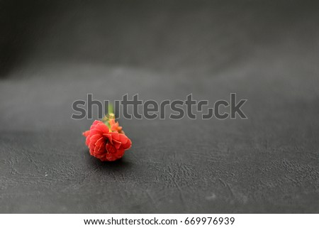 Flower with simple background #669976939