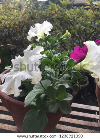 Flowers Annuals Plants.Kathmandu Nov 24/2018. #1238921350
