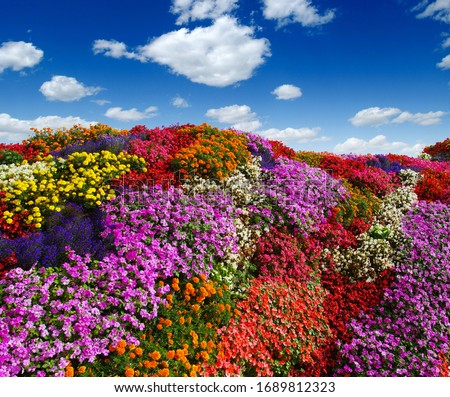 flowers growing on the field. colorful floral background Stock foto ©