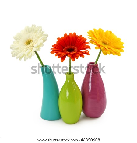 Flowers in vases isolated on white background