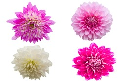 Flowers isolated on white background with clipping path by Macro lens .