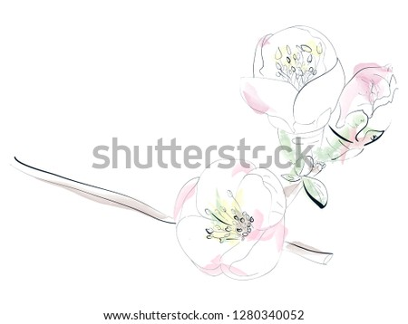 flowers of apple isolated