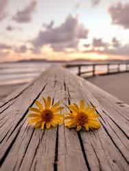 flowery sunrise on the beach