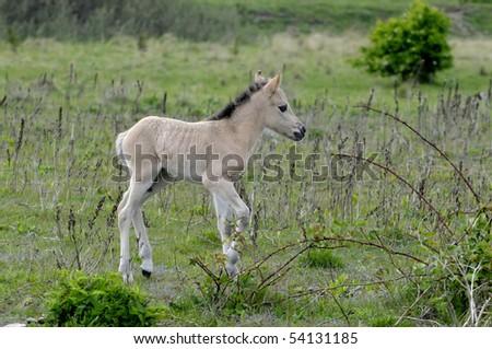 Foal - stock photo