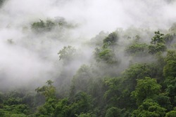 Fog on the forest with dense trees.rainny forest in world