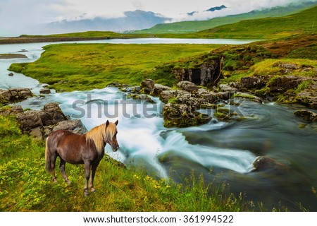 Foggy day in Iceland. On the shore of waterfall Icelandic horse grazing.
