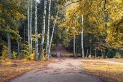 footpath and wooden bridge in the autumn forest with birch trees and yellow leaves.