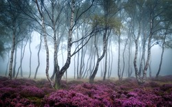 forest with trees in pink fog