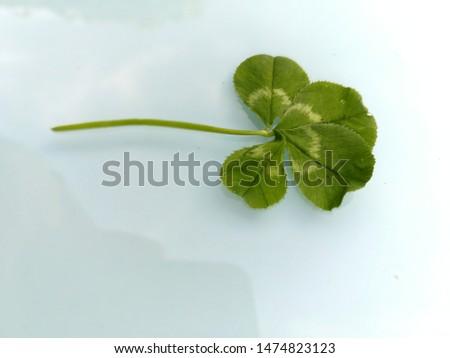 four-leaf clover should bring good luck #1474823123