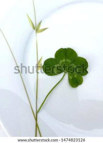 four-leaf clover should bring good luck #1474823126