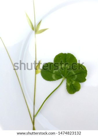 four-leaf clover should bring good luck #1474823132