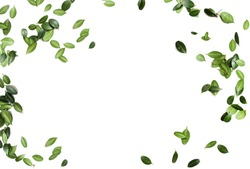 frame from green leaves isolated on white background. copy space