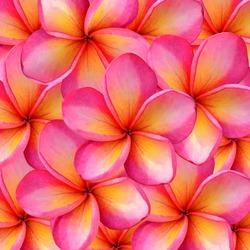 frangipani Background