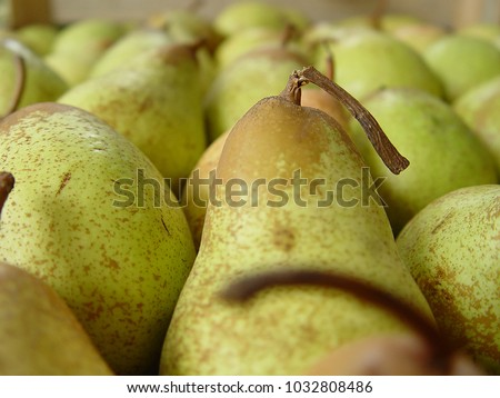 Fresh and healthy pears #1032808486
