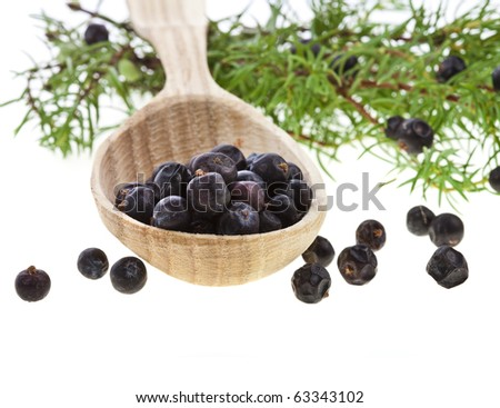 Fresh branch of juniper juniperus communis with berries in the wooden spoon , isolated on white background