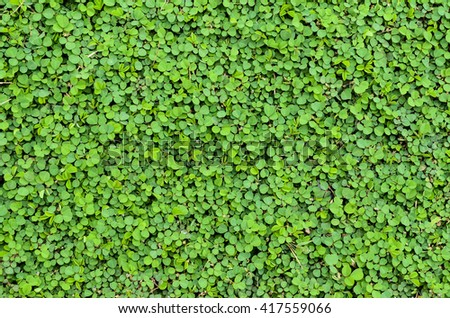 Fresh green leaves.Green background with leaves.