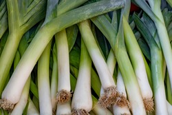 Fresh juicy raw leeks as a background, closeup. Natural background.