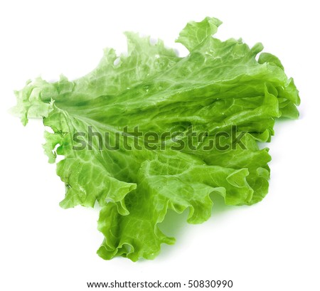 Fresh lettuce leaf isolated on white background