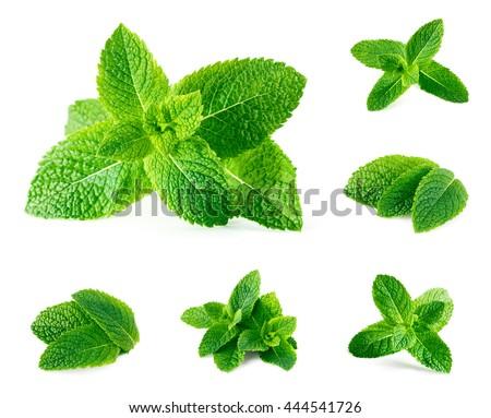 Shutterstock  Fresh mint isolated on white. Set