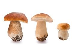 fresh Mushrooms   isolated  on white background