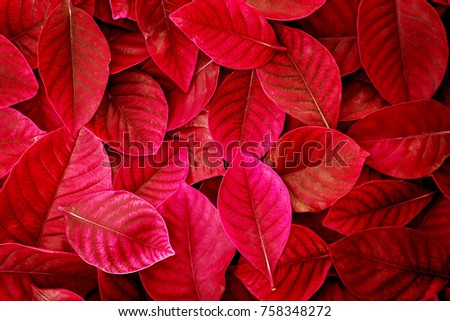 Stock Photo  Fresh tropical red  leaves background