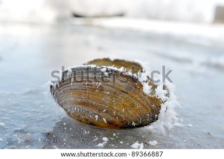 frozen seashell - stock photo