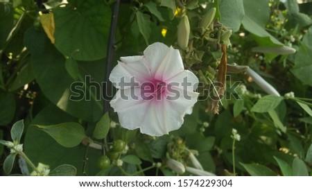 Garden  Beautiful  Closeup  Botany  Flora #1574229304