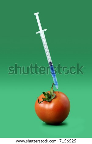 'genetically-modified' tomato receiving an injection of chemicals