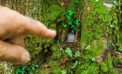 Geocaching showfinger points to geocache hiding with sign under root