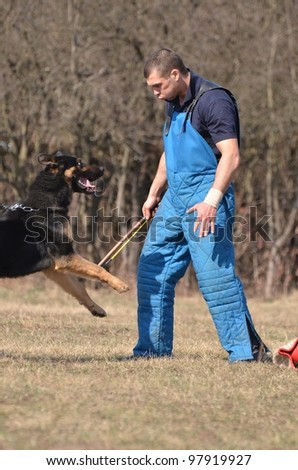 German shepherd - dog at a dog training center
