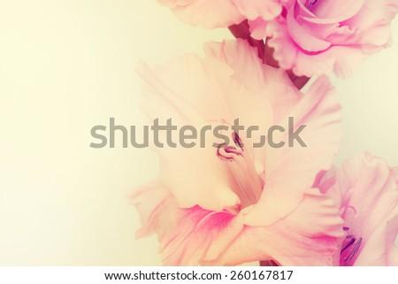 Gladiolus flowers.