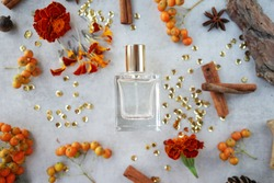glass perfume bottle with cinnamon sticks, orange flowers and bark fragments on gray background.Flower woody fragrance concept