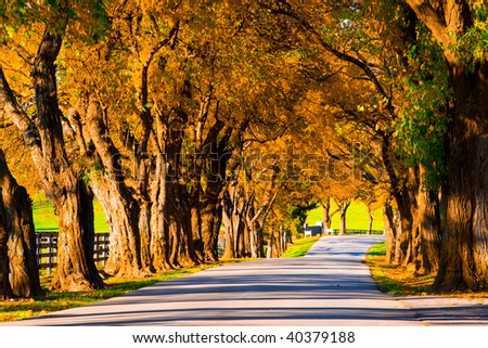 Gold colored autumn trees line the road in a park