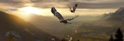 Golden eagles flying