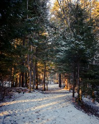 Golden Glow Along the Path : Sun shining through the branches over the path creates a golden glow along tunnel created by the trees in Nova Scotia's Hemlock Park.