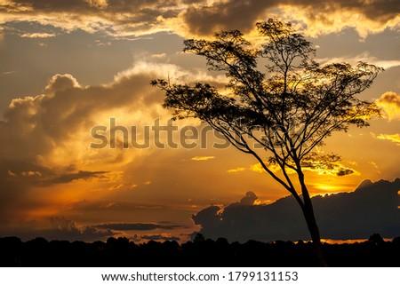 Golden hour in the brazilian cerrado Foto stock ©