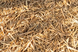 Golden yellow dried bamboo leaves on the ground background