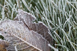 Grass and leaves in hoarfrost. Frosty white pattern.Late autumn and early winter nature.inter natural plant background.November and December. First frosts