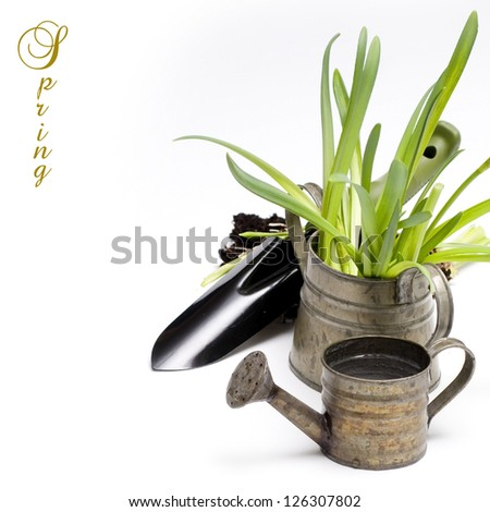 Grass in a flowerpots, watering can and garden tools isolated on white