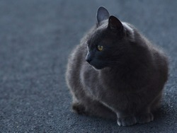 gray fluffy cat with yellow eyes looks hunting and wild outside on the grey road, really wild little beast looking for breakfast in the morning