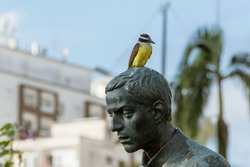 Great Kiskadee bird perched on the head of the statue of Father José de Anchieta located at the end of the beach in the city of Santos.