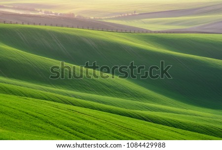 Great  Sunny Summer Landscape With Fields Of Wheat. Natural Spring Rural Landscape In Green Color. Green Wheat Field With Stripes And Wavy Abstract Landscape Pattern. Natural Green Background.